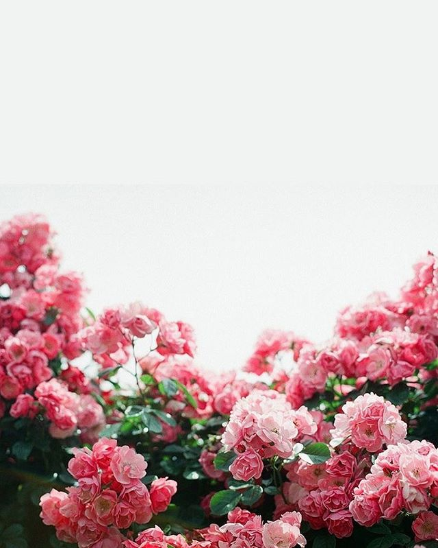 Pretty flower iPhone wallpaper
