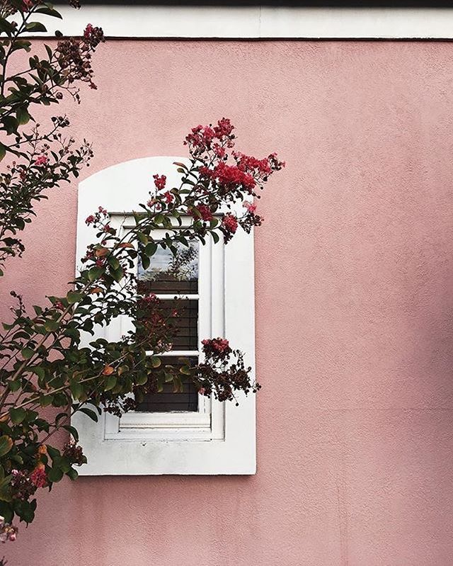 Pink wall and flowers