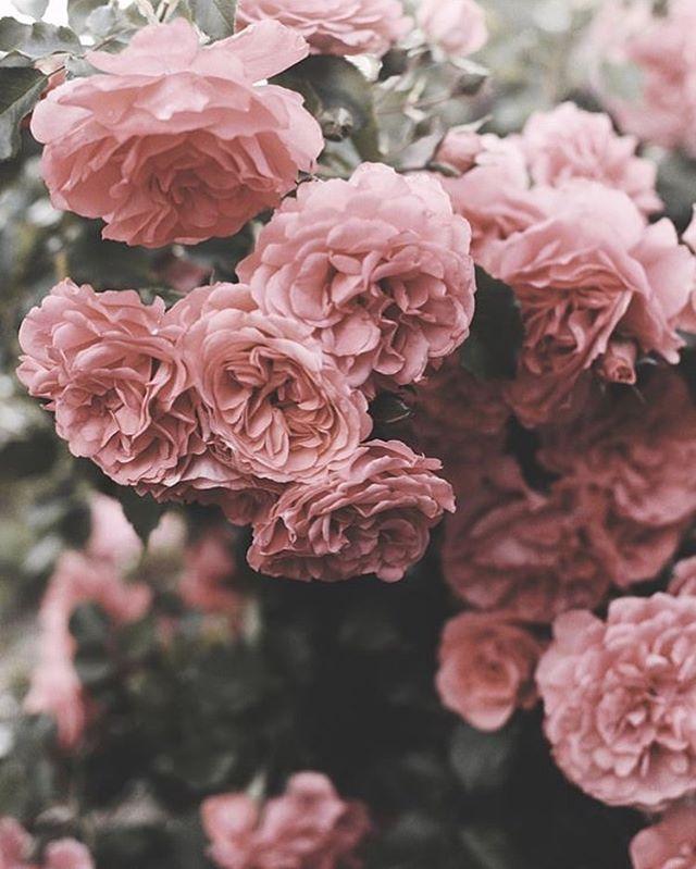 Amazing spring blooms