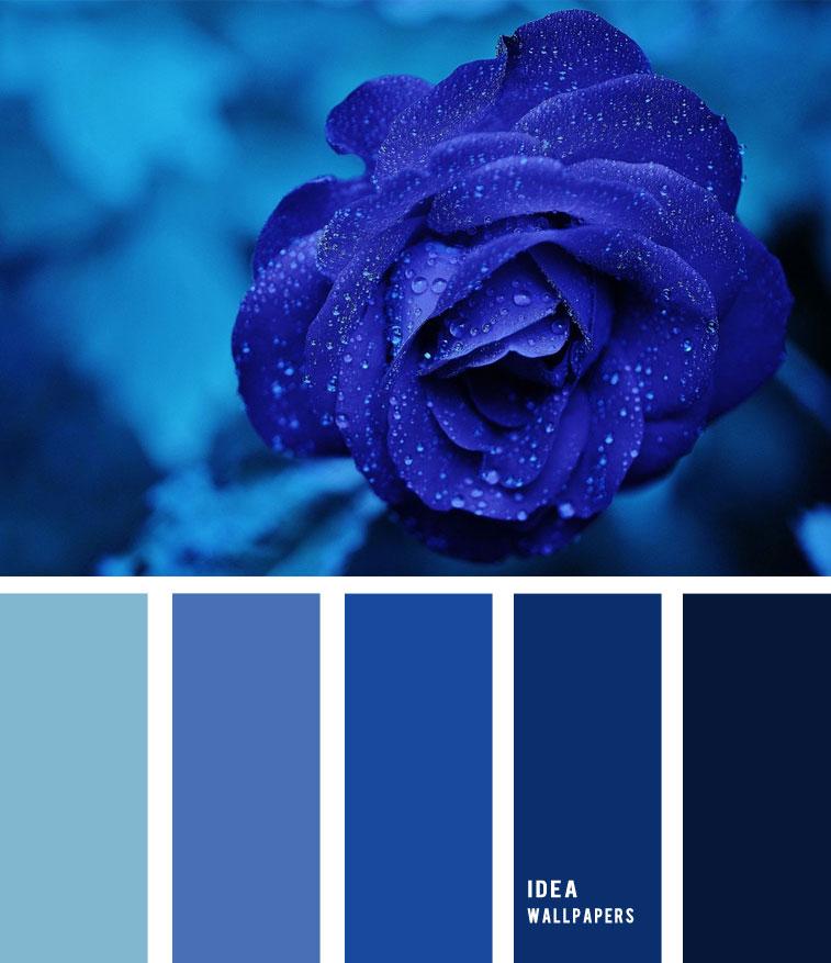 Midnight blue colour palette, color palette , blue rose inspired color palette #pantone #color #rose