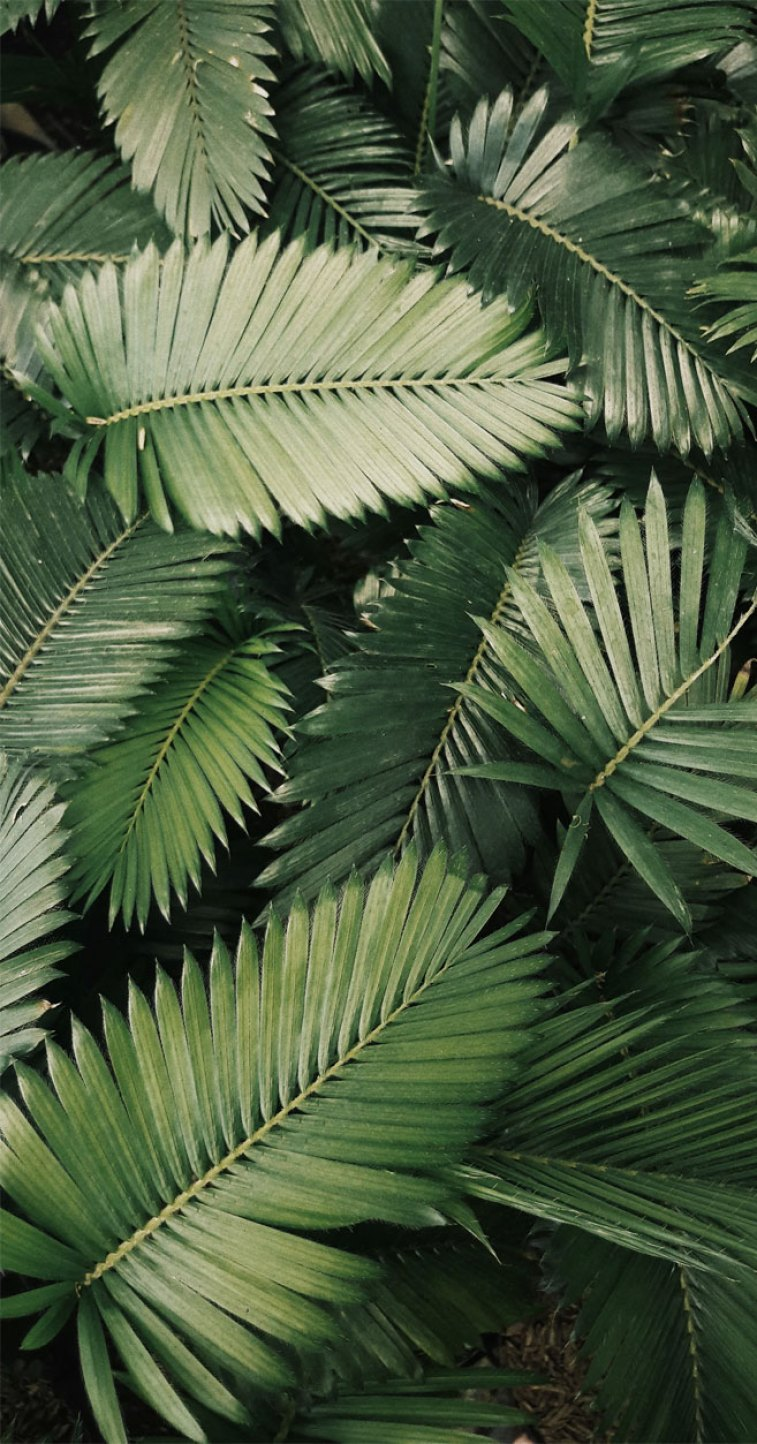 Looking for beautiful iPhone X wallpapers that have a calming affect, then check out these tropical leaves, botanicals, leaf iPhone wallpaper. - Tropical Leaves, Botanical, Leaf Phone Wallpaper - iphone background #wallpaper #background