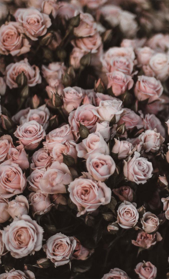 10 beautiful big bunch of flowers for Phone , wallpaper