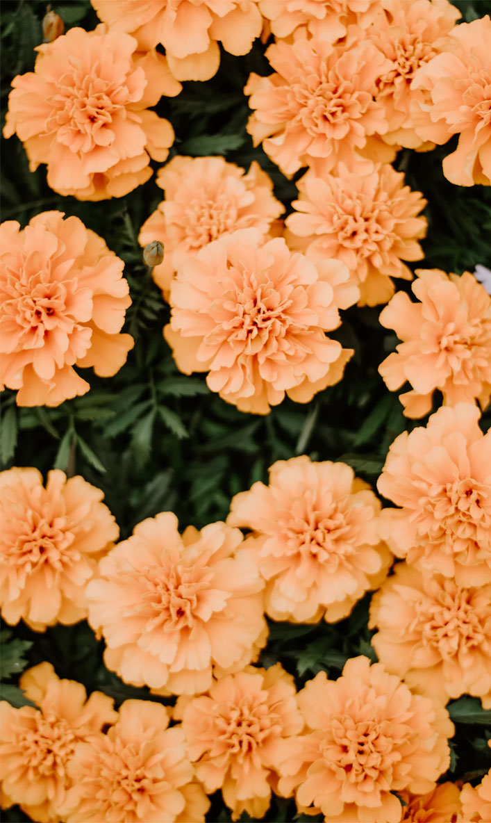 45 Beautiful Flower Iphone Wallpaper Ideas Orange Peach