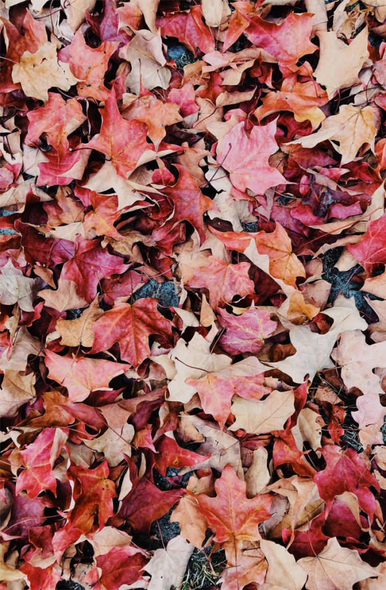 Beautiful Picture Of Autumn Leaves Idea Wallpapers Iphone Wallpapers Color Schemes
