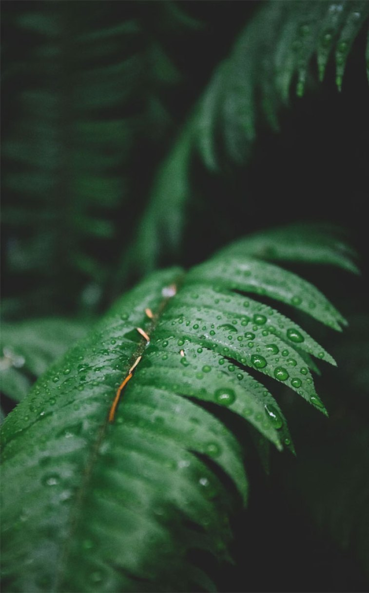 Rain Drops On Green Leaves Idea Wallpapers Iphone