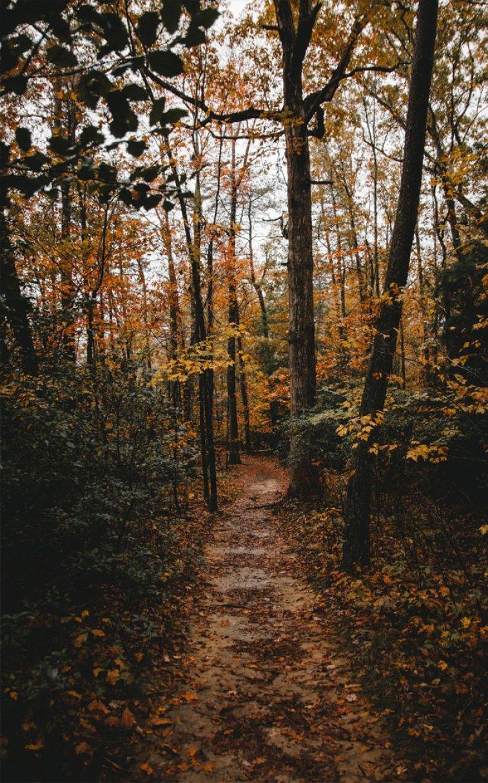 Gorgeous autumn leaves #iphone #wallpaper #autumn #color