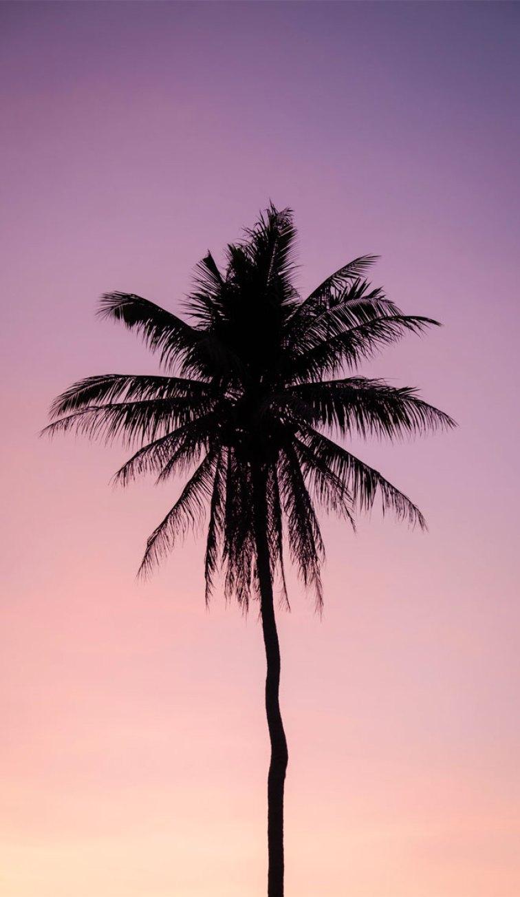 Mauve sky iPhone wallpaper , Evening sky iphone background,Sunset beach iPhone wallpaper, iphone background, summer