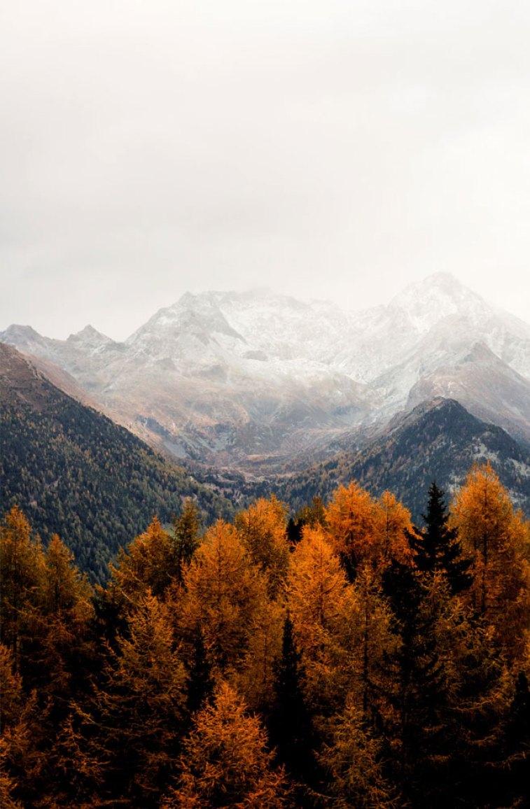 Beautiful rust colour autumn tree against Grey mountains