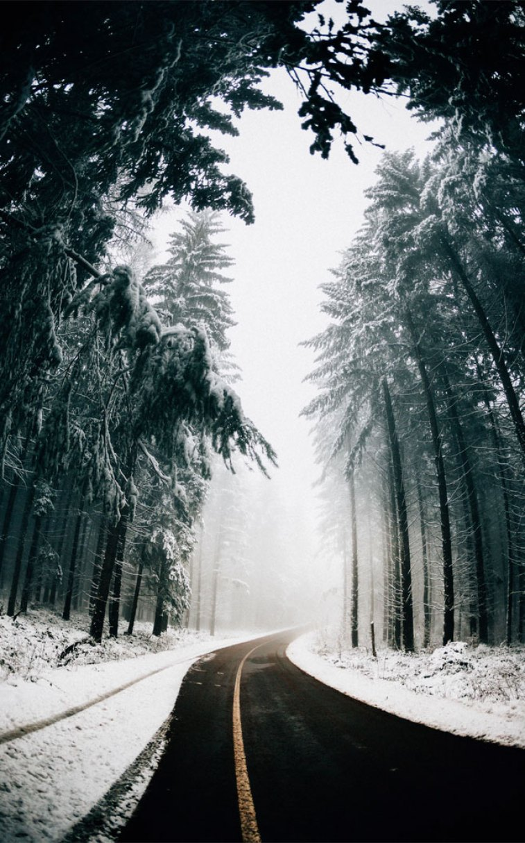 Beautiful winter foggy on road  , snow ,pinecones #iphone #wallpaper #winter snow #color