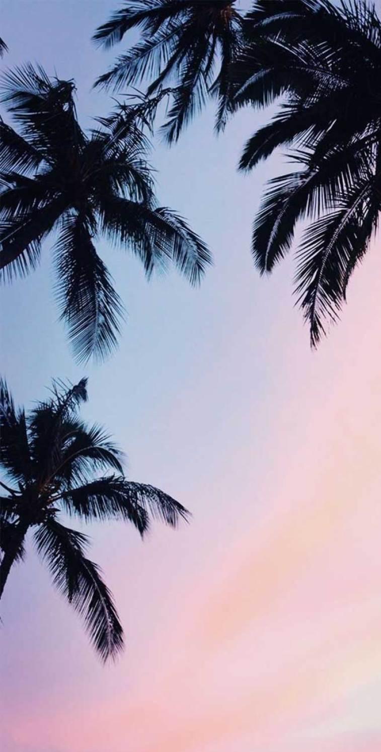 Palm trees mauve sky  coconut trees #wallpaper #mauvesky #sky