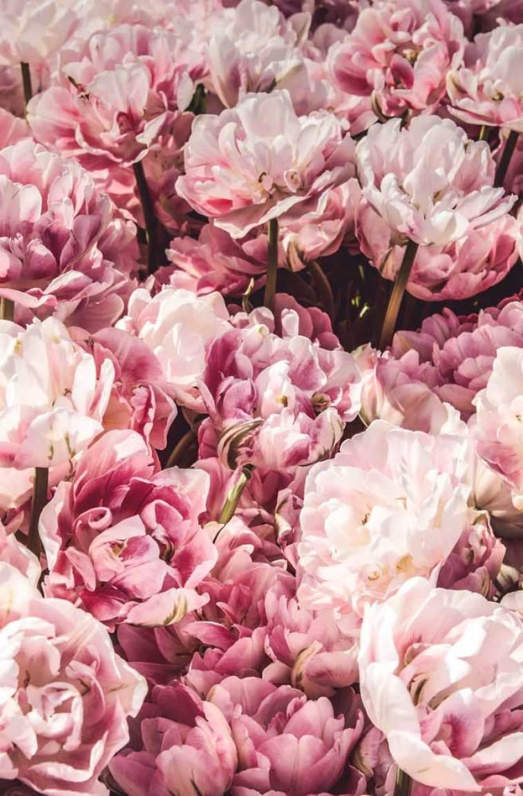 Pretty blush flowers
