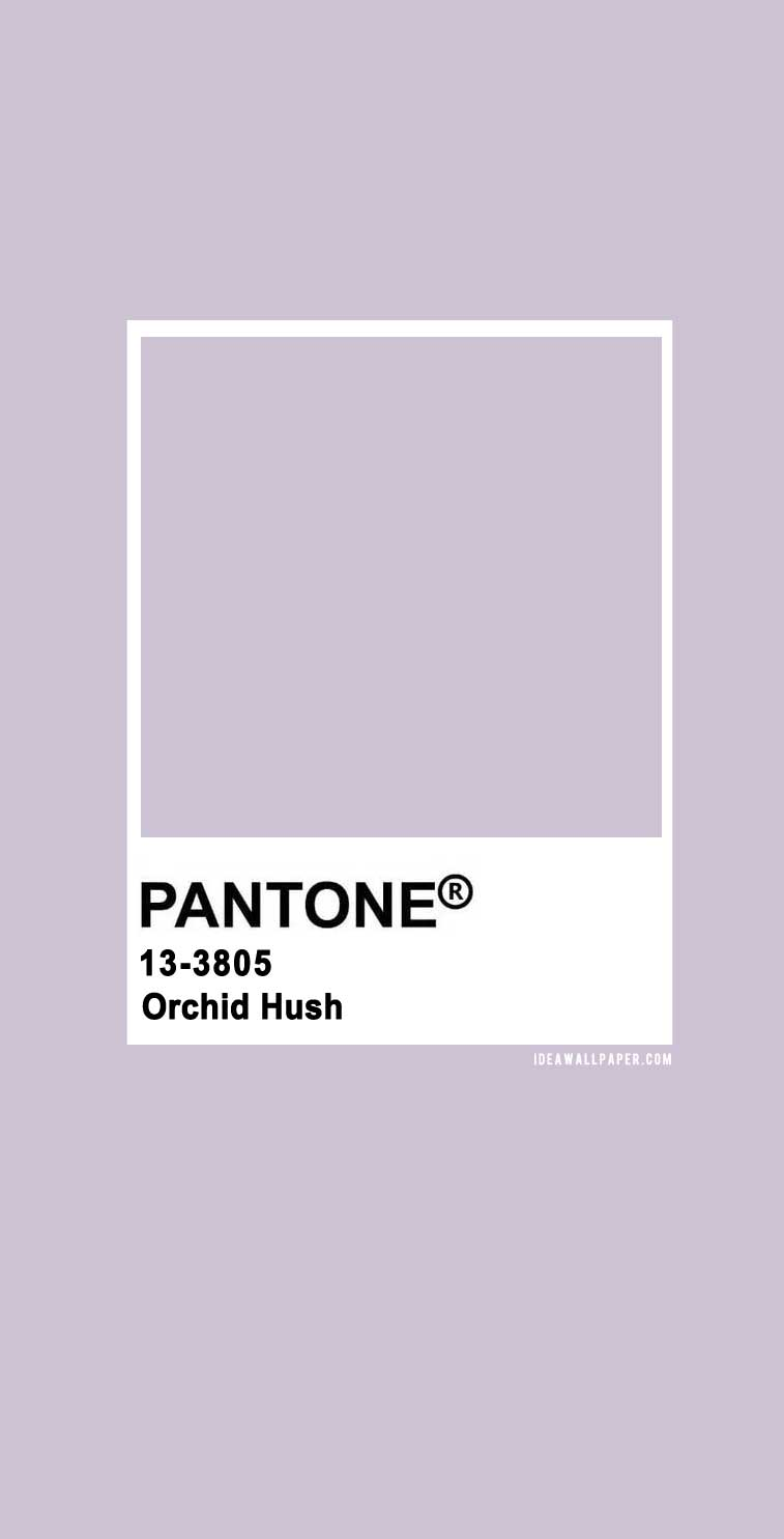100 Pantone Color Palettes : Pantone Orchid Hush 13-3805#pantone #color #purple #lavender #colors