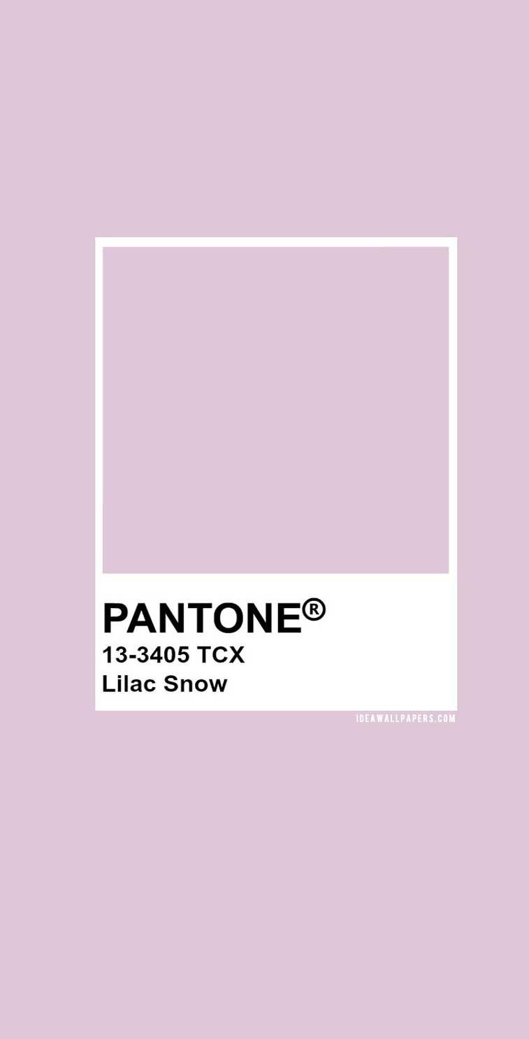 Color Palette - Pantone Lilac Snow : Pantone 13-3405 #color #pantone #colorideas