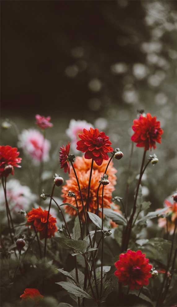 pretty flower iphone wallpapers, iphone wallpapers, wallpaper iphone, blossom iphone wallpapers, flower iphone wallpapers #wallpapers #iphonewallpaper spring aesthetics, spring aesthetic, blossom, blossom aesthetic