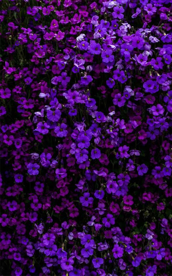 purple flowers, flower iphone wallpaper, blue purple flowers