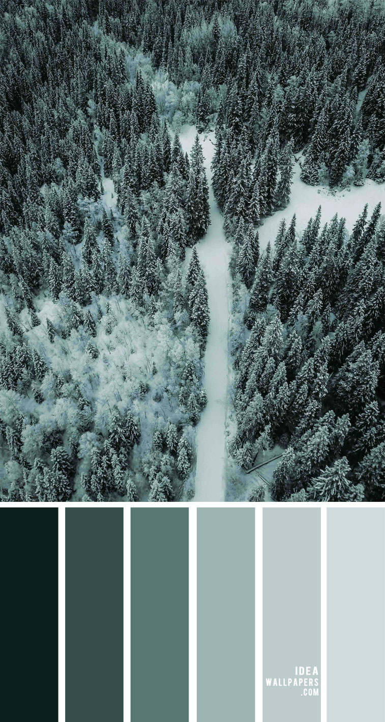 winter green color palette, color combos, color scheme, sage green color combination, forest green color