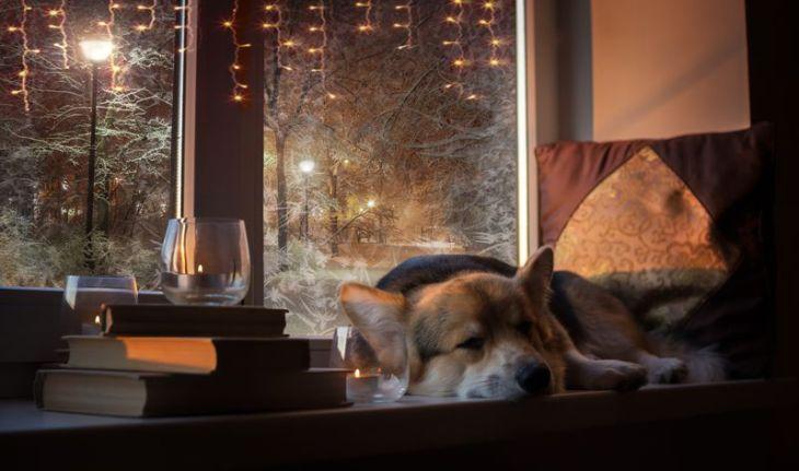 pies przy oknie