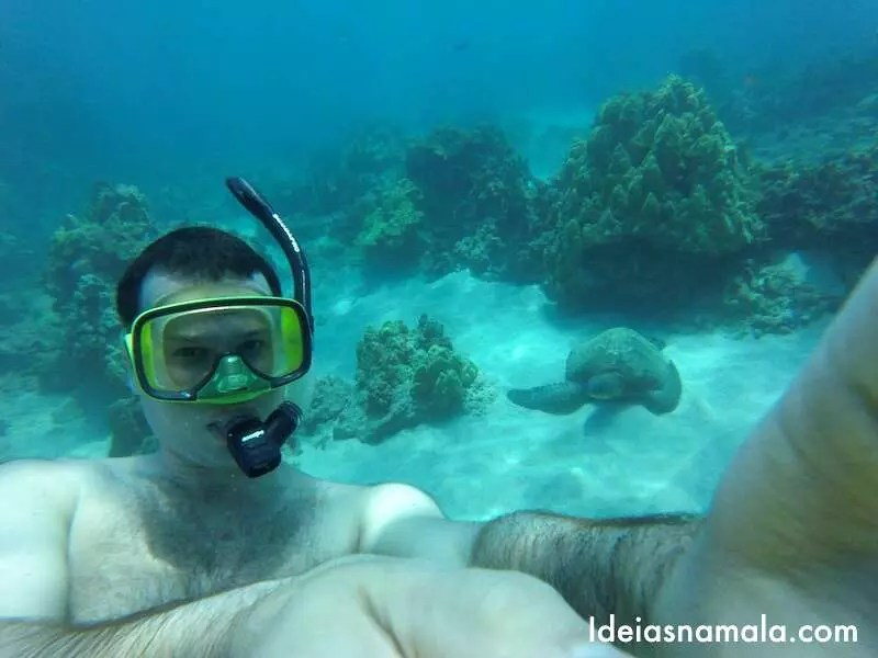 9abe1da74 Corais caprichados, peixes coloridos, tartarugas marinhas gigantes e com  sorte golfinhos e até baleias, o mergulho (ou snorkel) pela cratera de  Molokini é ...