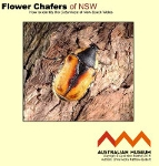Flower_Chafers_key_icon