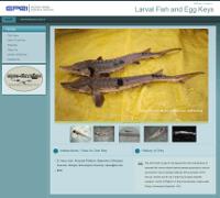 fish_larval