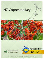NZ Coprosma Key