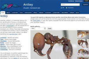 AntKey