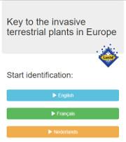 Terrestrial invasive plants Lucid Key