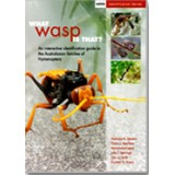 What Wasp Is That?