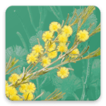 Wattle App Icon