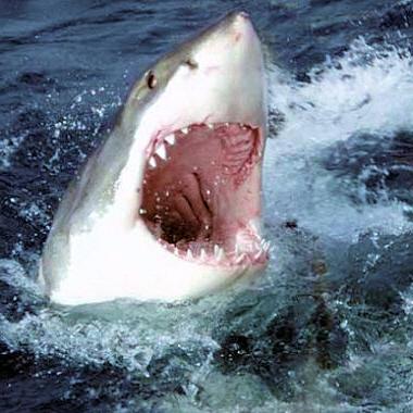 """La connerie n'a pas de limite : Un journal tunisien   croit à l'histoire conspirassioniste des """"requins juifs du Mossad """""""
