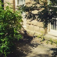 urban_plantlife-300x300