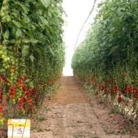 Agricoltura israeliana: un modello sostenibile?