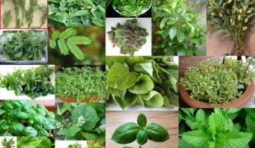 Βότανα και Αρωματικά φυτά