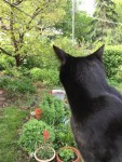 Watching for trespassers in my garden.