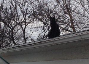 Griffin thinks there might be mice hiding in the gutters.