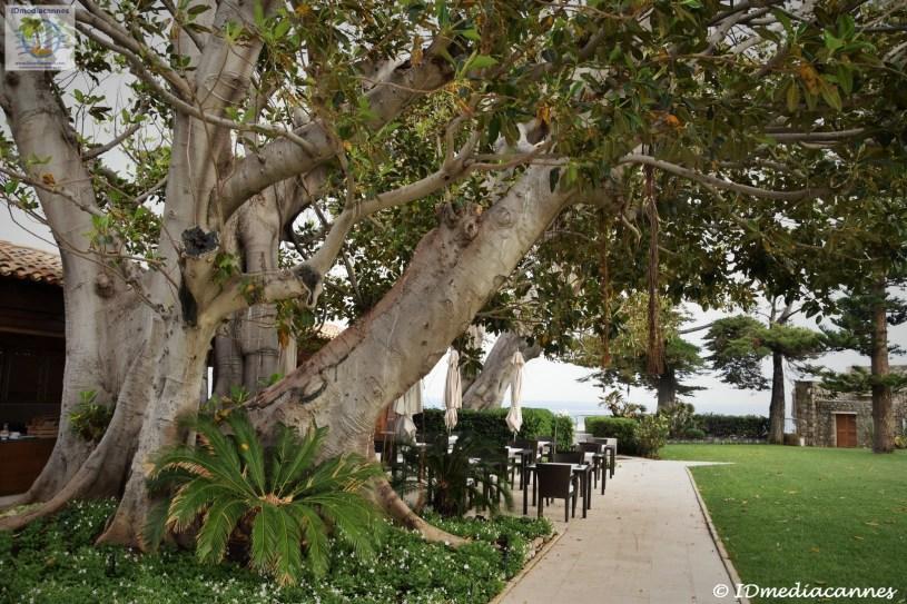 Le Ficus & Cap Estel