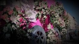 bataille-de-fleurs