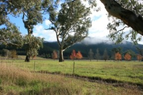 Valley of a Thousand Hills - Strath Creek Region Country Victoria - Aust. 2010 Photo 2 Photographed by Abstract Artist: Karen Robinson NB: All images are protected by copyright laws!
