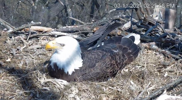 Parenting tips from an eagle