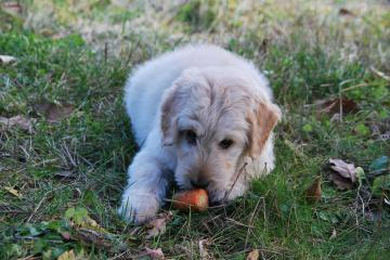 are carrots good for dogs