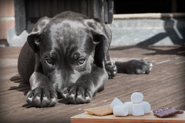 can dogs eat marshmallows