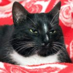How to Recognize and Treat Arthritis in Your Cat