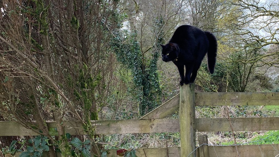He's just a cat on a fence