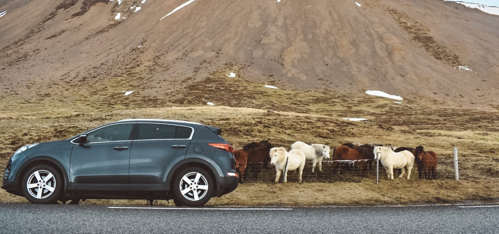 Horses on ring road in Iceland