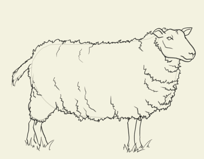sheep drawing How to draw sheep