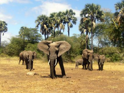 elephant_family_dream-of-africa_tours_safari_tanzania