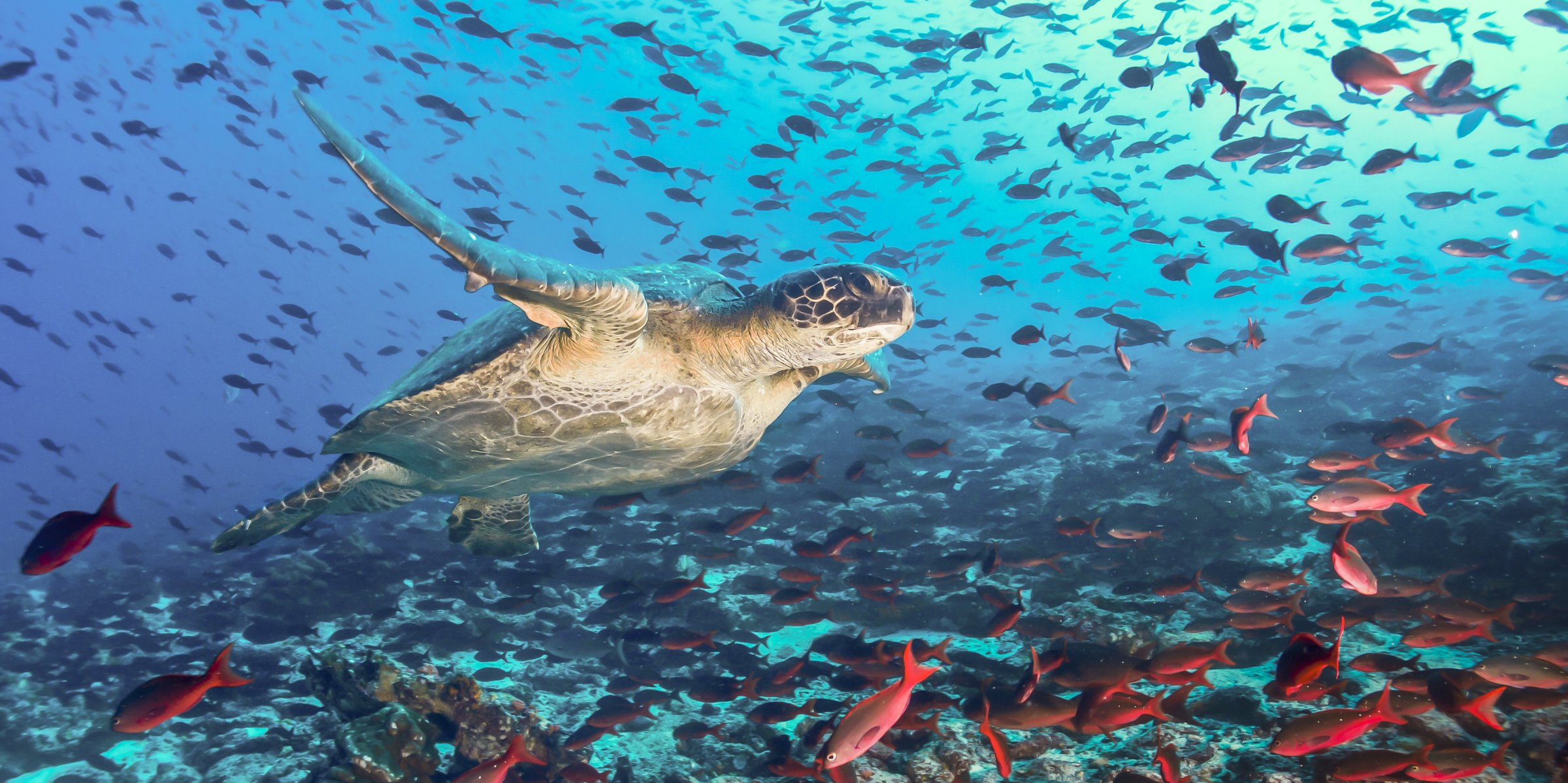 10 Interesting Facts About Earth S Oceans