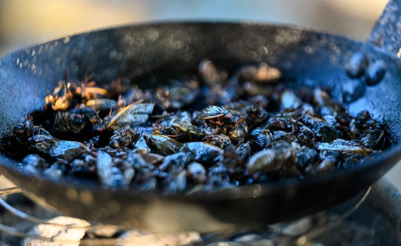 Cicadas are fried as they are prepared for a sushi recipe by Chef Bun Lai at Fort Totten Park in Washington, U.S., May 23, 2021. (AFP Photo)