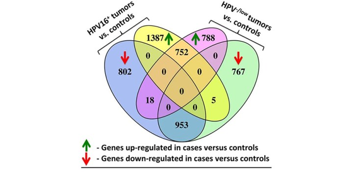 Venn diagram of differentially expressed genes in tumours versus control samples. Blue and yellow ovals show the numbers of down- and upregulated genes in 54 HPV16+ tumours versus 24 controls, correspondingly. Pink and green ovals show the numbers of down- and upregulated genes in 341 HPV−/low tumours versus 24 controls. Controls include three low HPV33 expressing samples and one low HPV16 expressing sample (