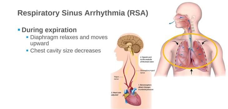 Respiratory sinus arrhythmia